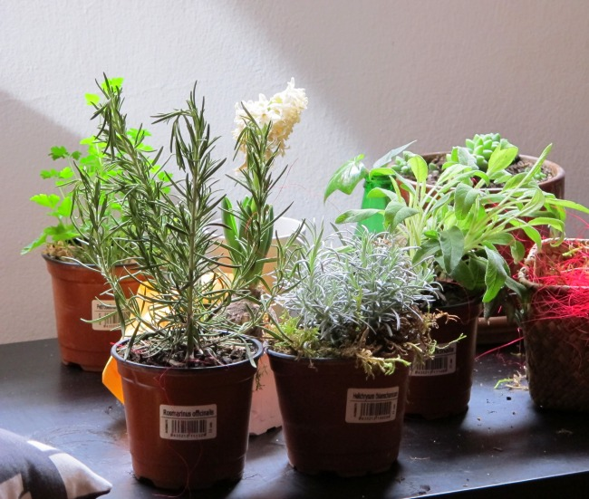 herbs and a white hyacinthus.jpg