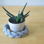 braided knitted headband and beautiful succulent